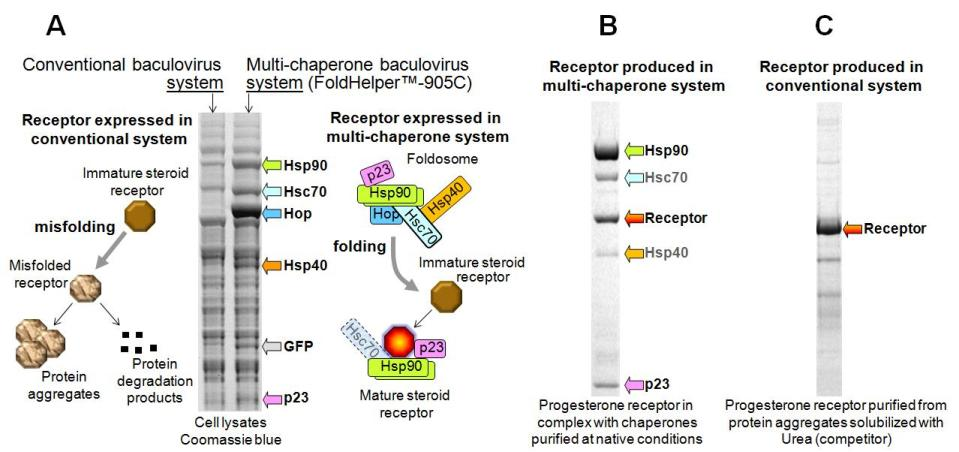 steroid receptor structure